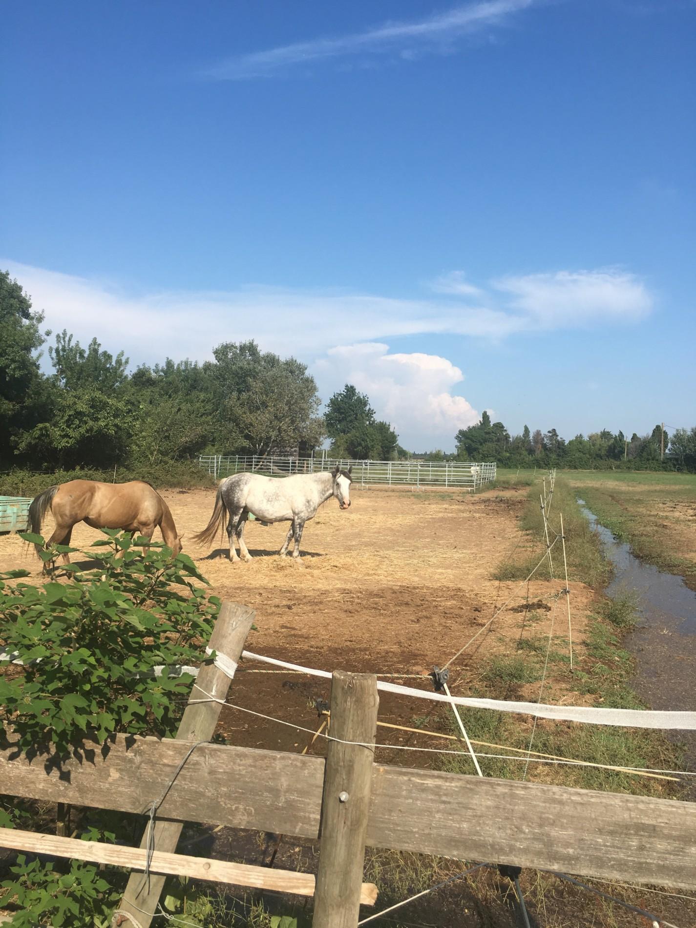 Mas Provencal A Vendre En Camargue mas provençal à vendre arles - mas avec box à chevaux a arles